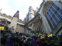 ST7564 : Bath Abbey by Alex McGregor