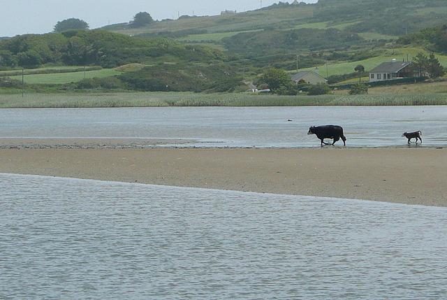 Crossing the estuary