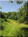 SX6974 : Field by the Two Moors Way by Derek Harper