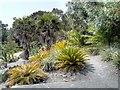 SZ5476 : Arid Garden, Ventnor Botanic Garden by David Dixon