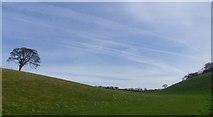 SE9436 : Lonely tree in Swindale. by steven ruffles