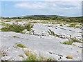 R2999 : Limestone pavement in the Burren by Oliver Dixon