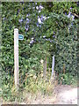 TM3085 : Footpath off Park Road by Adrian Cable