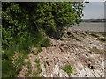 SX4361 : Thrift on the rocks near Neal Point by Derek Harper