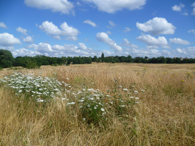East Wickham Open Space in high summer