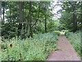 NX7444 : Road, Netherlaw by Richard Webb