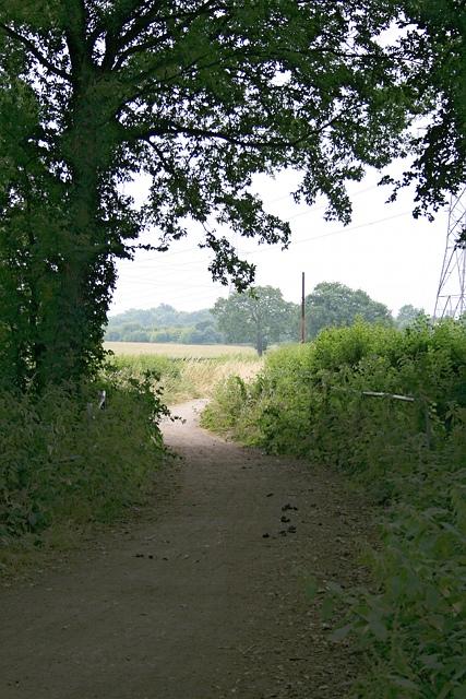 Birchwood Lane