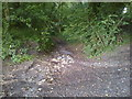 ST6055 : The road in Chewton Wood by James Ayres