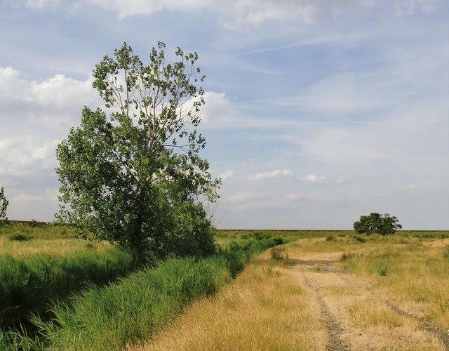 Marsh landscape near Lower Hope Point, July