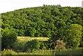 SX4065 : Hornifast Wood by Derek Harper