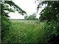 SK7644 : Overgrown paddocks near Sibthorpe by Andrew Tatlow