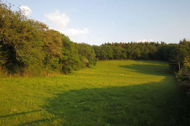 Sheep pasture near Gulworthy