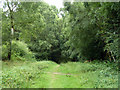 TQ2130 : Path, St. Leonard's Forest by Robin Webster