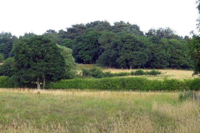 Youlbury Wood
