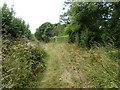 SR9598 : The bridle way round Orielton Wood by David Medcalf