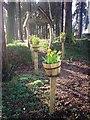 SN1306 : Sardis Community Gardens by welshbabe