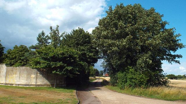 Track near Fanhams Hall, Ware
