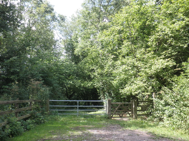 Access point, Adcombe Wood