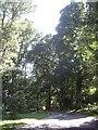 NO7396 : Dogleg bend in castle driveway by Stanley Howe