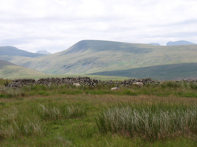 The summit of Swainson Knott