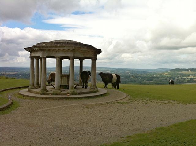 Cattle admire the Inglis Memorial