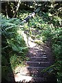 NO7497 : Forest footpath: steps down by Stanley Howe