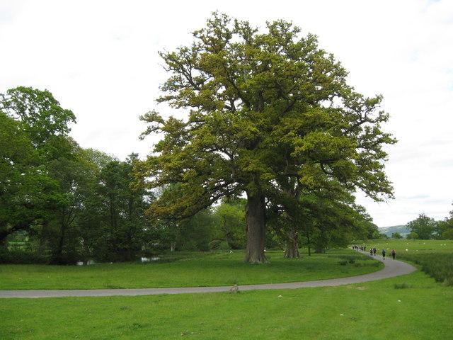 Ancient inhabitants of the parkland-Brampton Bryan, Herefordshire