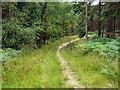 TQ2733 : Path, Tilgate Forest by Robin Webster