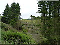 NO3506 : Windblown timber by James Allan