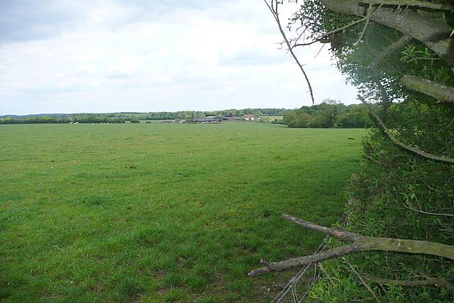 Grassland at Rotten Row