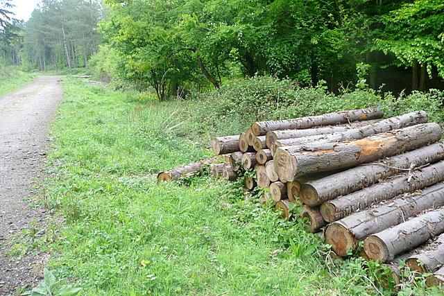Log pile in Homefield Wood