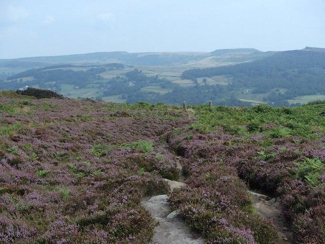 Footpath across heather moorland