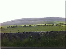 M2807 : Field of cows at Knockycallanan by Darrin Antrobus