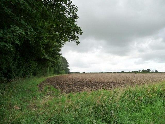 Bare field north of Simon's Plantation