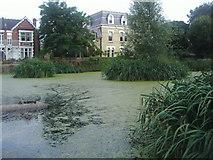 TQ1977 : Pond by Kew Green by David Howard