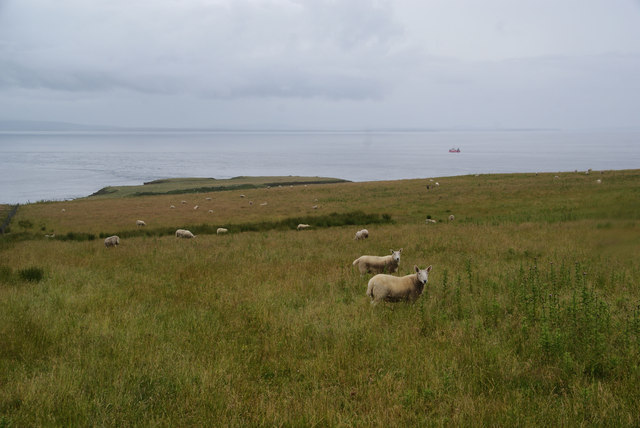 Sheep above St John's Point