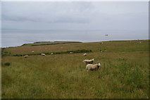 ND3174 : Sheep above St John's Point by Bill Boaden