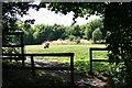 TQ1558 : Pachesham Golf Centre green by Hugh Craddock
