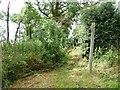 TF3263 : Public footpath through Sall Holt by Christine Johnstone