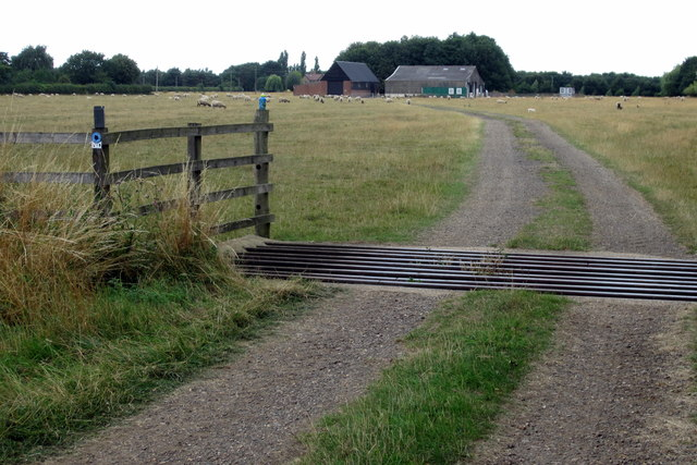 Cattle grid on the Bunyan Trail