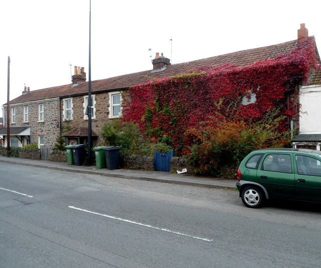 Red ivy, Yate