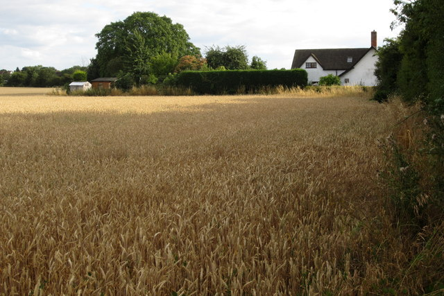 Corn and cottage at Duck End