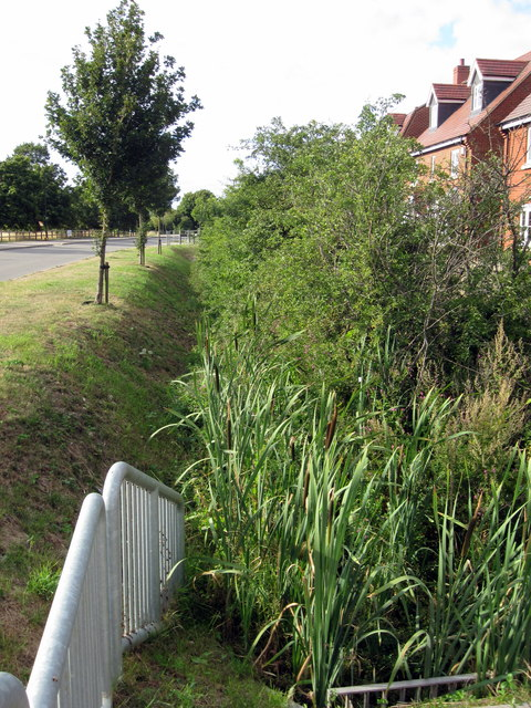 Stream and hedge by the new houses on the old Bedford Road