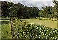 SJ4094 : Croxteth Park lake by Paul Harrop