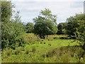 C3030 : Scrubland, Saltpans by Richard Webb