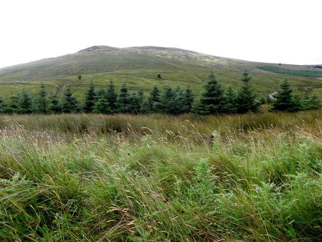 Bellavally Upper