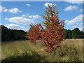 SU9941 : Trees, Rowe's Flashe by Alan Hunt