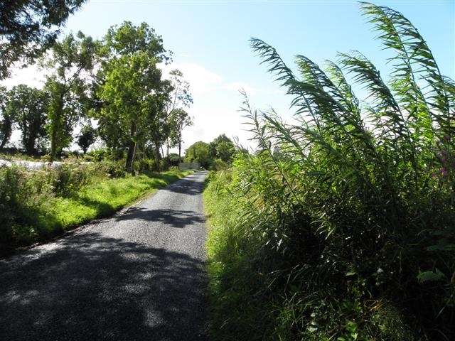Road at Gortmore