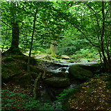 SK2477 : Woodland stream, Horse Hay Coppice by Peter Barr