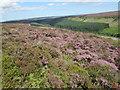NZ6104 : Ingleby Moor by T  Eyre